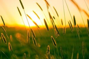 Fall summer-970347_640 Cattails