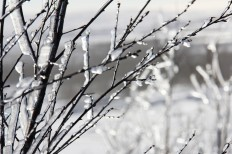 cropped-winter-ice-pixaby-breathtaking-1098225_1280.jpg